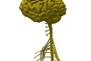 """memoria, juicio, personalidad,sistema nervioso central (SNC), """"cerebro y nervios"""", El SCN es un sistema tan frágil,Alzheimer o Parkinson, epilepsia, la esquizofrenia,función cognoscitiva,sinapsis, neuronas, células, enfermedades del sistema nervioso central,impulso tecnológico,manejo de enfermedades crónicas, demencias,diabetes, hipertensión arterial,"""