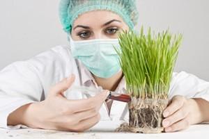ingeniería genética,ataque de microorganismo, ambiente, sociedad, prevención, salud, bienestar, seguridad alimentaria,mejoramiento del cultivo, seguridad alimentaria,