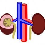 cáncer de riñón, cancinoma de células, medicina preventiva, enfoque preventivo, tarapía floral, factores de riesgo, metástasis, alternativas naturales, cáncer de testículo, síntomas,