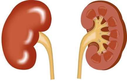 por qué se enferman los riñones