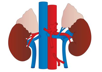 Insuficiencia Renal Crónica, presión Sanguinea, glóbulos rojos, orina, hemoglobina, riñones, hematocrito, enfermedades silenciosas, Anemia Renal, proteínas,