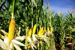 """Dicen los investigadores que en esta """"nueva revolución verde"""" los campesinos y la agricultura en general, serían los más beneficiados. FOTO: Depositphotos"""