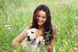 Una manera de mantener saludables y seguros a nuestros perros es entendiendo como  protegerlos de las enfermedades transmitidas por vectores (ETV).