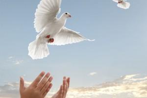 Par de manos liberando una paloma con una puesta de sol