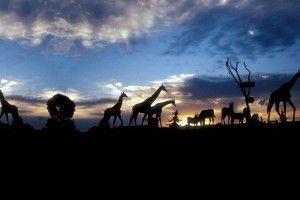 Atardecer en Africam Safari