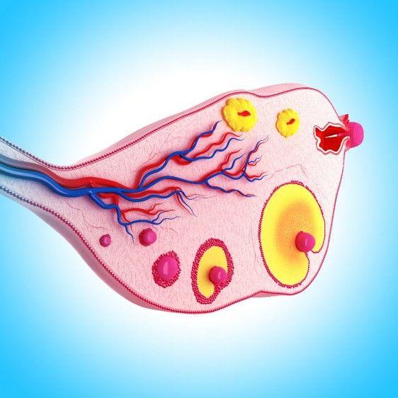 Ciclo de ovario