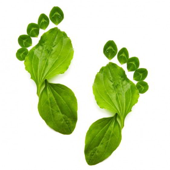 Huella de un pie hecha con hojas de plantas verdes