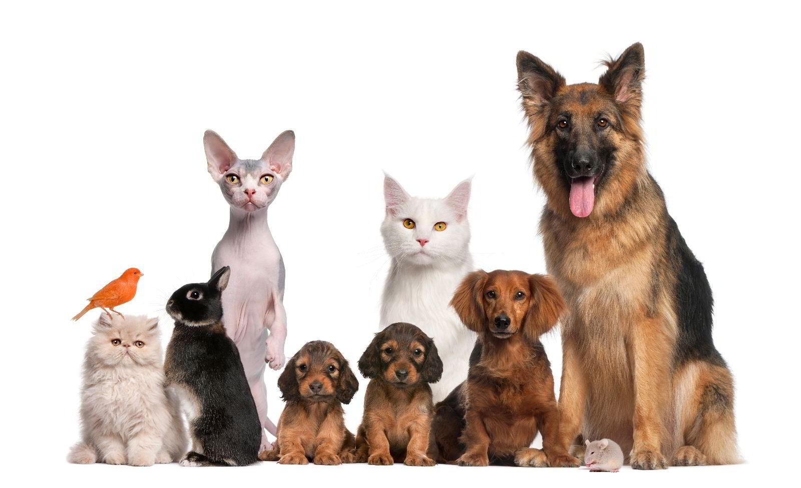 Perro, gato, pájaro y conejo
