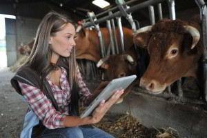 Mujer en un granero revisando información al lado de una vaca
