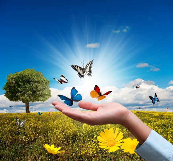 Acercamiento a la mano de una mujer que deja en libertad a mariposas volando al fondo un bosque