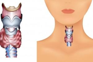 Ilustración de ubicación de la tiroides