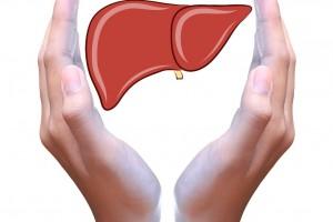manos protegiendo una lilustracipon de un hígado