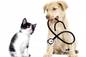 Gato con un perro que sostiene un estetoscopio