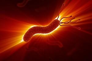 Ilustración de la Helicobacter pylori