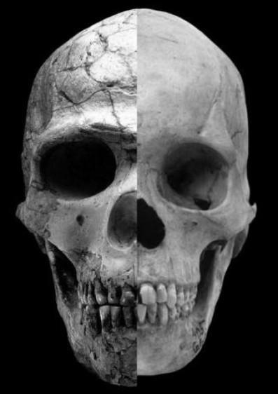 Imagen de un cráneo dividida a la mitad