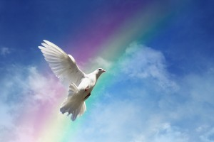Paloma blanca volando al fondo un cielo azul y un arco iris