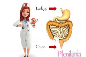 Ilustración de la ubicación del esofago