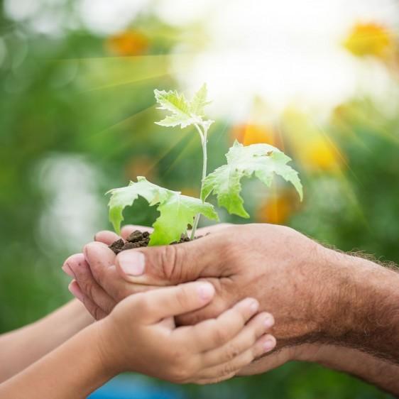Manos de un hombre y un niño sosteniendo una planta joven hacia el sol