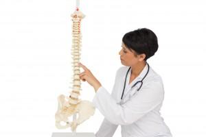 Fisioterapeuta mostranndo una columna vertebral