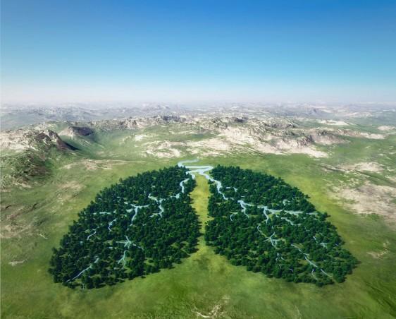 Vista area de un bosque con forma de pulmón