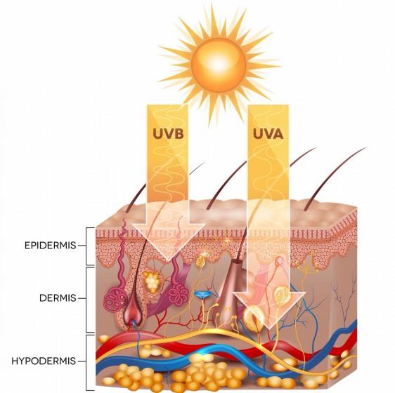 Ilustracipon de capas de la piel y rayos solares