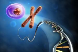 Cadena de ADN y celula