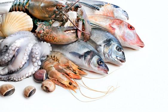 Pescados y mariscos frescos
