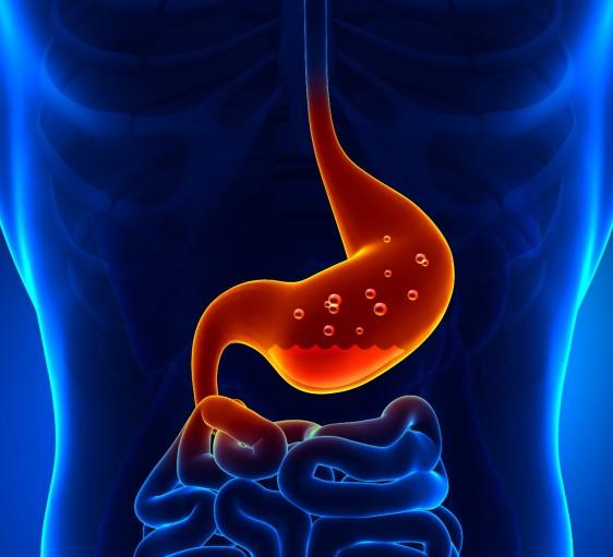Ilustración del estomago con ácido gástrico