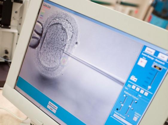 Llama diputada a emitir lineamientos para regular reproducción asistida e investigar compra-venta de células