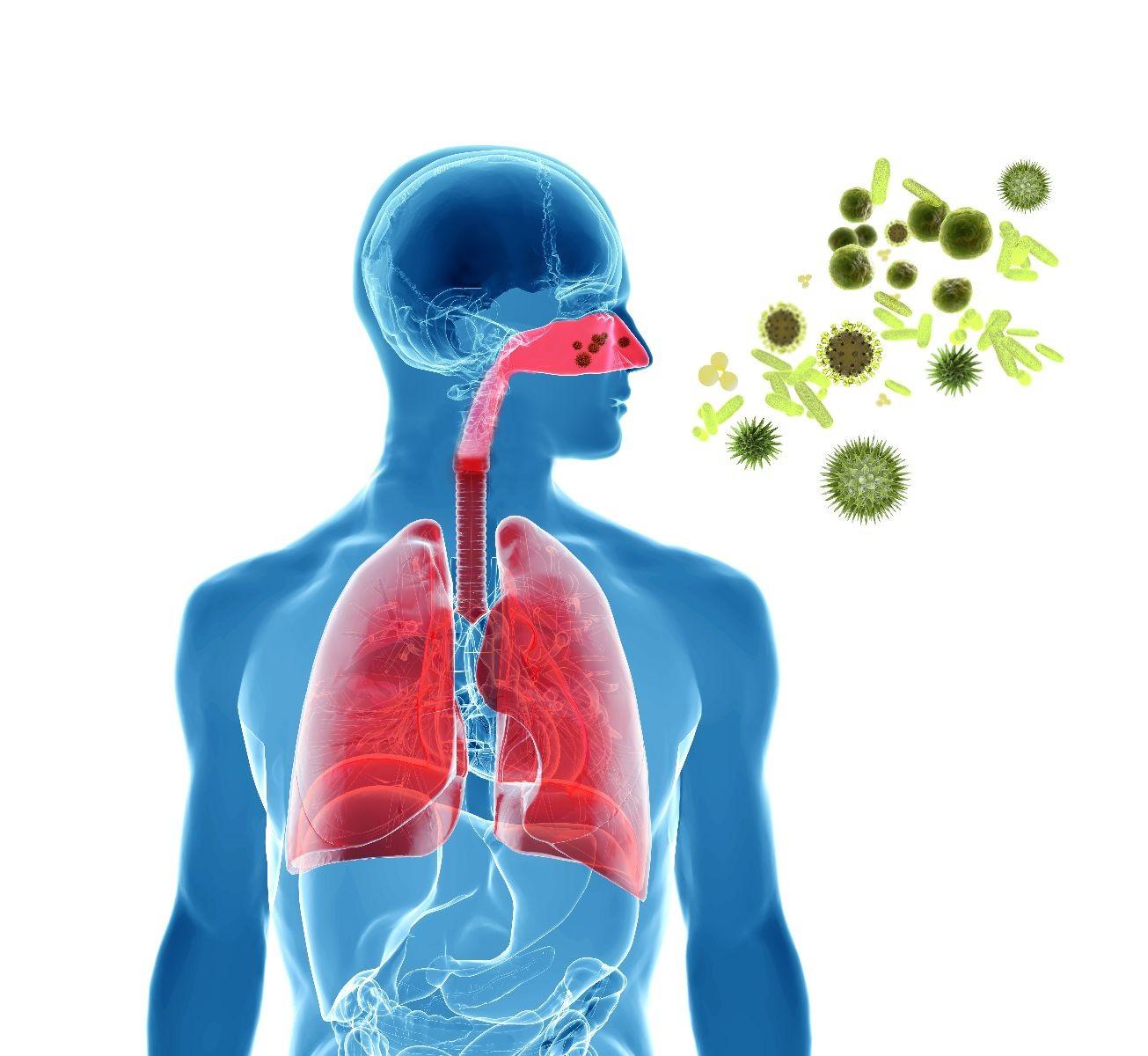 ilustración de sistema pulmonar