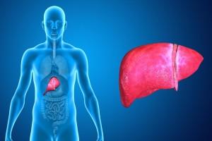 Ilustración de ubicación del hígado