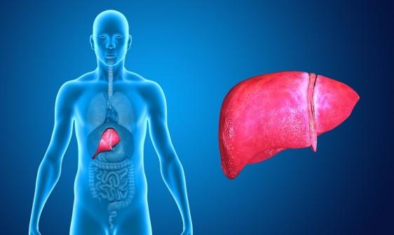 Lo que debes conocer para identificar y evitar al hígado graso ...