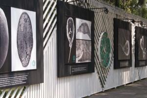 La exposición reúne en imágenes de gran formato, años de investigación realizada en Cinvestav sobre virus, parásitos y amibas, entre otros agentes patógenos.