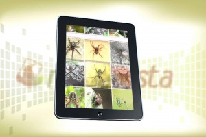 """""""App"""" gratuita para capturar, compartir y conocer la naturaleza de México"""