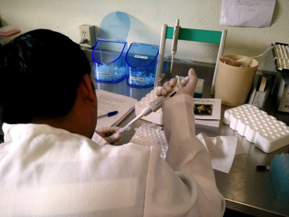 El Tratamiento Acortado Estrictamente Supervisado (TAES) incluye fármacos, estudios de laboratorio y rayos X
