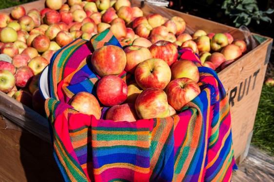 La manzana fresca es una fruta ideal recomendada por pediatras, para bebés de más de 6 meses de edad.