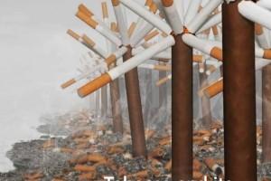 El tabaco y su impacto medioambiental: una visión de conjunto - en inglés