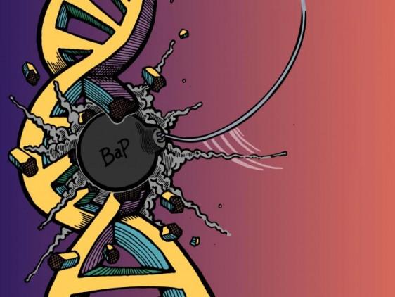 Una nueva técnica de los científicos de la Facultad de Medicina de la University of North Carolina (UNC, Universidad del Norte de Carolina), dirigida por el ganador del Premio Nobel Aziz Sancar, revela un amplio daño genético en el ADN que causa un importante carcinógeno.