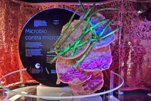 """Por mucho tiempo los investigadores se enfocaron en el concepto de """"gérmenes"""" y pensaron que los microbios eran organismos dañinos hasta que descubrieron que hay microbios comensales, es decir que viven dentro de nosotros y no nos dañan, ni nos ayudan; también hay microbios mutualistas que se benefician de nosotros y nosotros de ellos."""