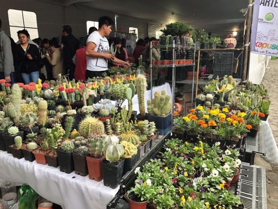 Feria Nacional de las Cactáceas en Axapusco, estado de México, que está ubicado a 15 minutos de las Pirámides de Teotihuacán sobre la carretera México-Tulancingo.