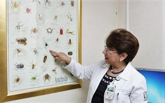 La demanda de atención registrada es de 20 casos de mordedura de araña violinista, 18 de araña capulina; 18 personas por serpiente de cascabel y 15 por alacranismo.