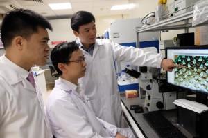 De izquierda a derecha  Profesor asistente  Xu Chenjie, Dr Than Aung, Profesor Chen Peng conversando sobre una imágen en microscopio del parche de microagujas