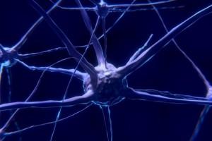 Ocrelizumab posee un perfil beneficio-riesgo favorable demostrado en tres grandes estudios de fase III con diversas poblaciones, incluidos pacientes con esclerosis múltiple incipiente