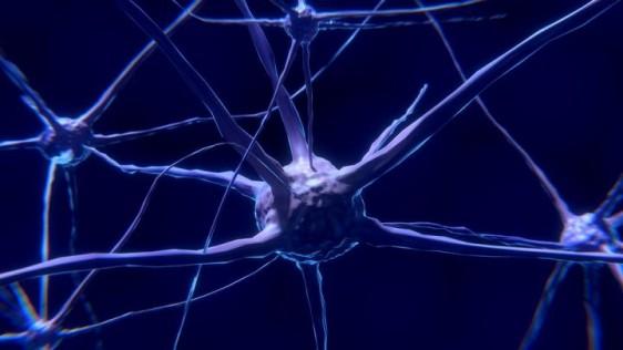 Investigadores del Centro de Regulación Genómica (CRG) en Barcelona, descubren un mecanismo que regula una proteína que está vinculada con la enfermedad de Parkinson y la atrofia multisistémica.