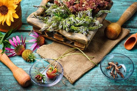 La FNIHMATN Representa a los campesinos que siembran y recolectan plantas medicinales así como a los productores de remedios, tratamientos y suplementos alimenticios con ellas elaborados, a los locales que los comercializan y a los terapeutas que los usan y recomiendan.