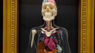Estos modelos de tamaño real y específicos a un paciente, pueden ser muy valiosos para los cirujanos, a medida que deciden cuáles métodos y técnicas serían mejores para una intervención quirúrgica. Los modelos son particularmente útiles en procedimientos raros, complejos o quizás nuevos.