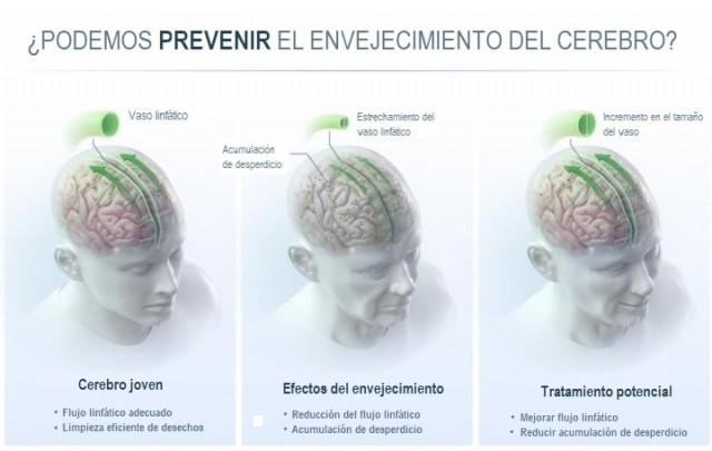 ¿Podemos prevenir el envejecimiento del cerebro?