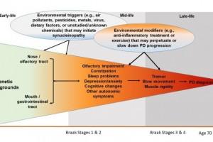 Se cree que los factores ambientales desempeñan un papel clave en el desarrollo de la enfermedad de parkinson (EP), pero poco se sabe sobre los desencadenantes ambientales específicos.