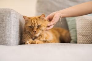 Una mordedura o un arañazo de gato conllevan ciertos riesgos particulares y es común que se infecten.