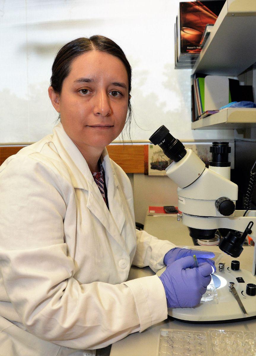 Lucía Mendoza Viveros, del IIBm de la UNAM, analiza la relación entre los relojes biológicos y el metabolismo, y cómo se producen patologías cuando no están sincronizados